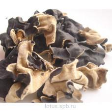Грибы древесные сушеные